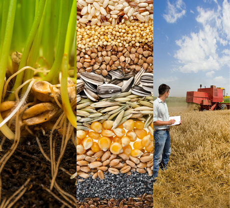 What is agronomy?